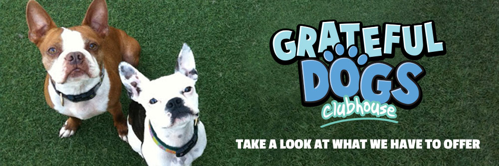 Take a look at what Grateful Dogs Clubhouse has to offer