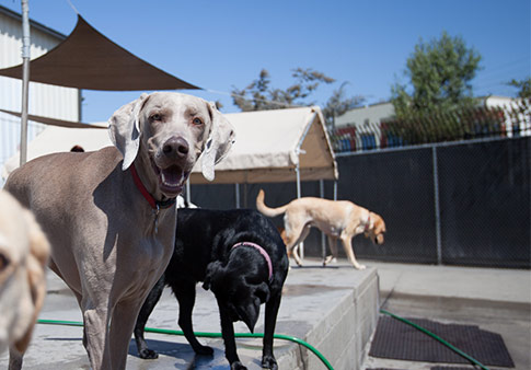 Happy dogs on daycare patio