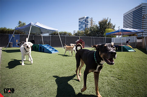 outside play yard for large dogs