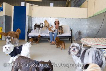 Dog Lounge