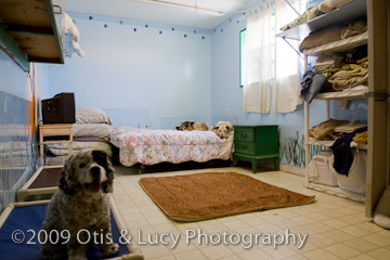 Back doggy bedroom