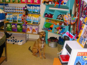 inside of doggy boutique